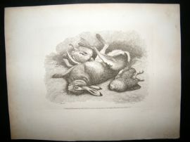 Howitt 1811 Antique Etching. Rabbit & Birds